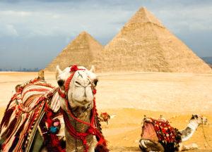 Kamele in Ägypten
