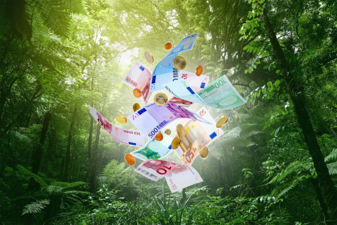 Dschungelkönig Geld