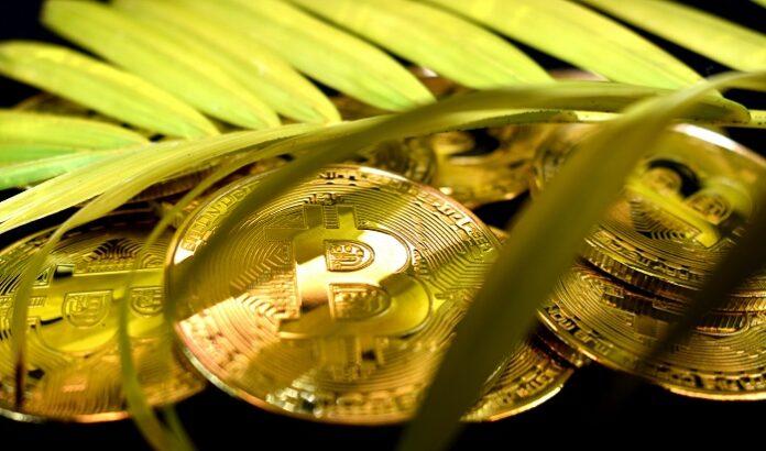 Bitcoins im Dschungel